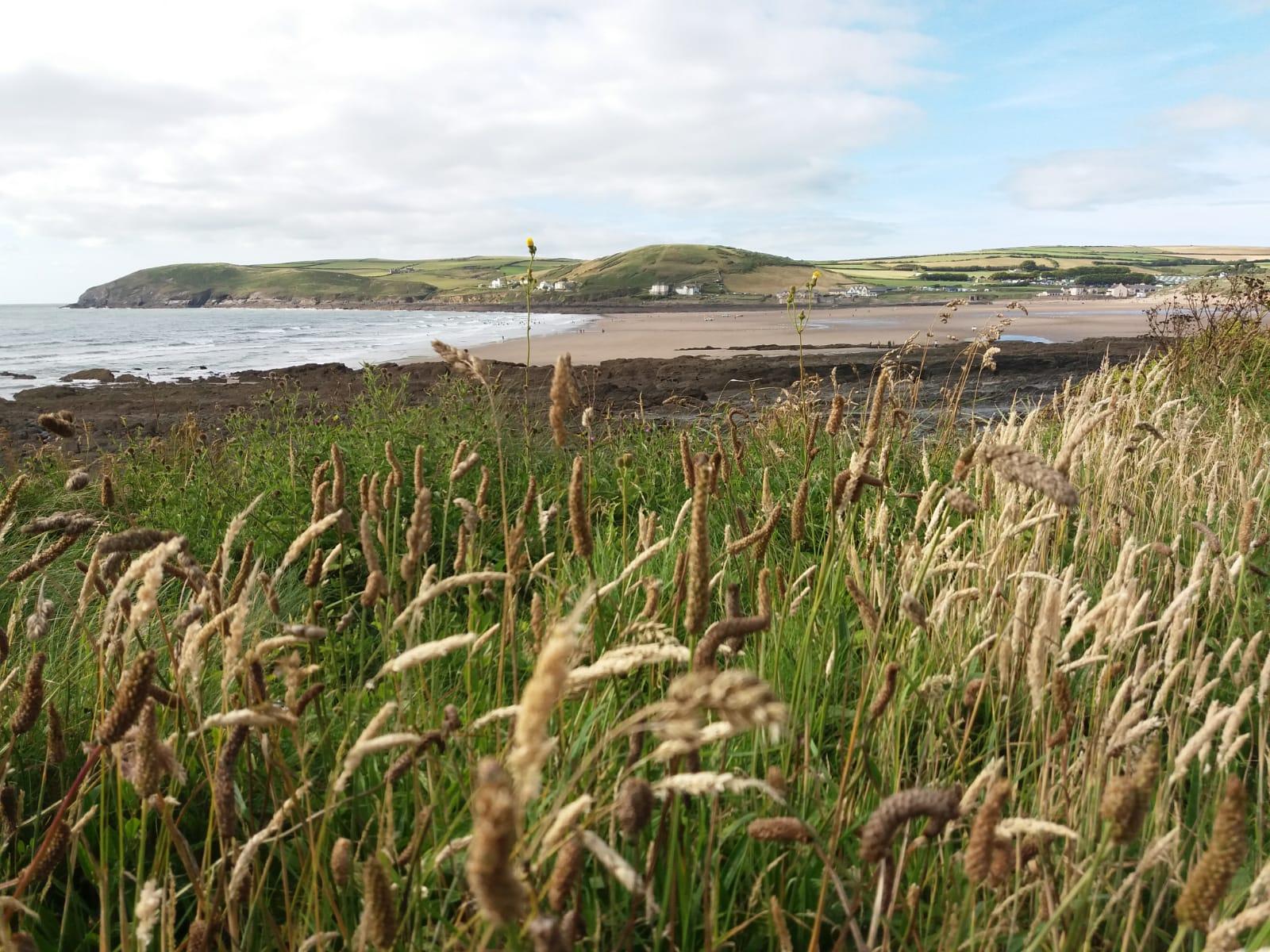 croyde grass